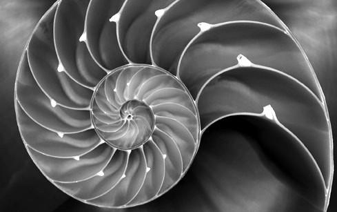 fractal-nautilus.jpg