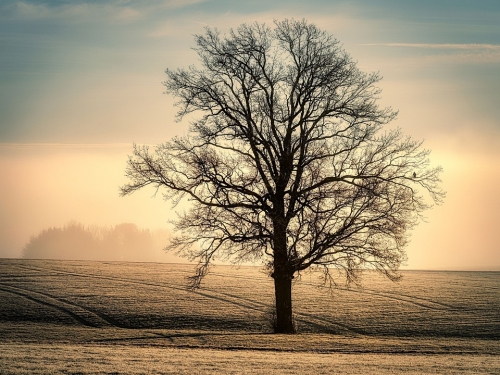 tree-5861902_960_720.jpg